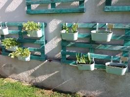 Φωτογραφίες Κηπουρικής-Γεωπονίας